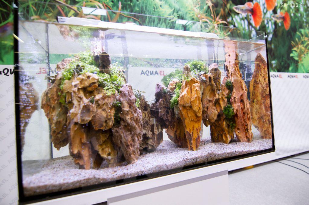 aquael - akwarystyka