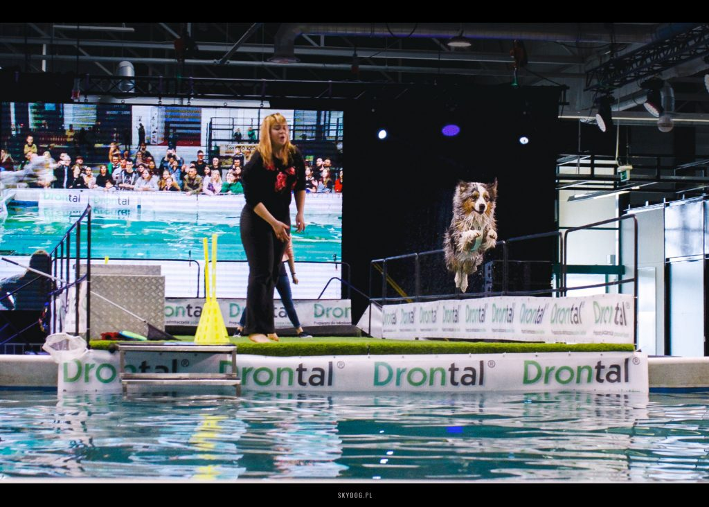 Dog Diving zawody