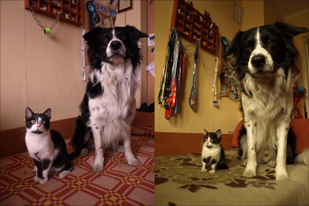Kot i pies - rok różnicy
