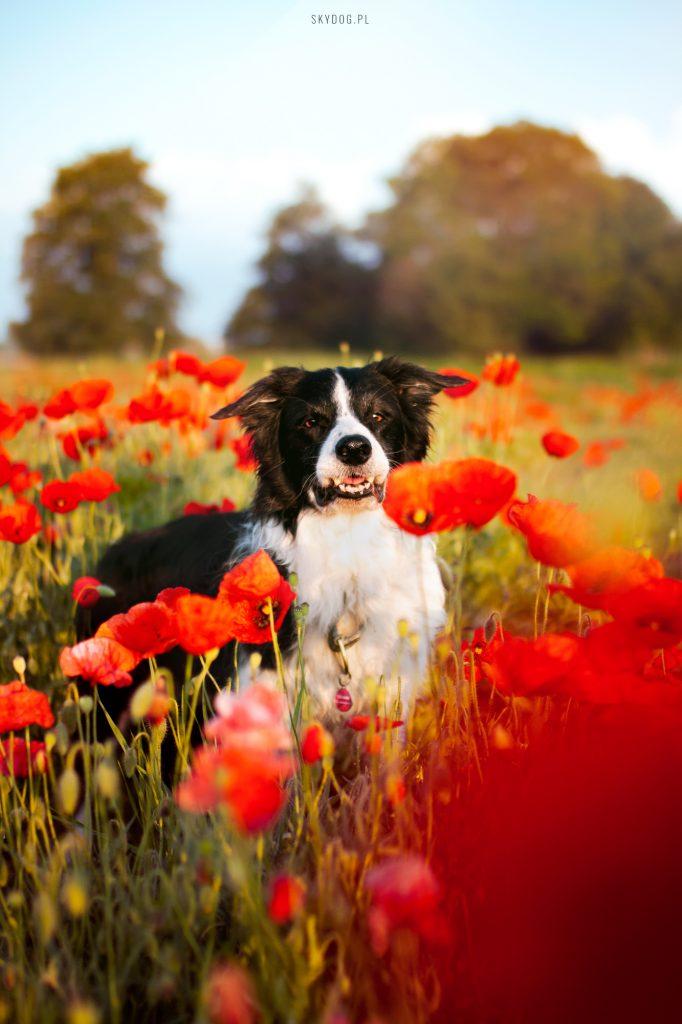 Długi spacer to podstawa posiadania psa
