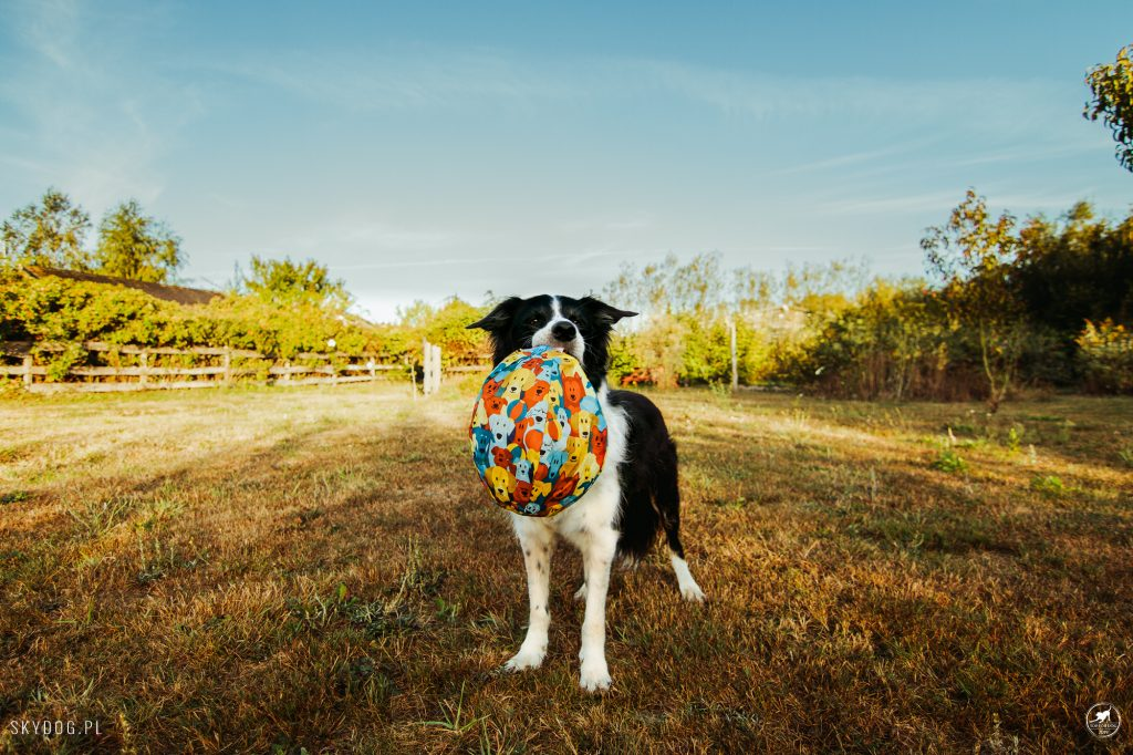 Pies z zabawką PetBloon
