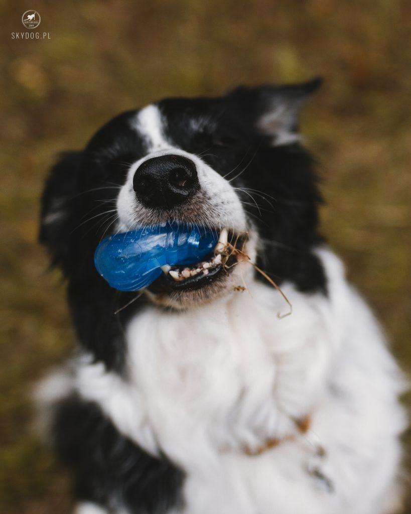Piłka Orka Tennis Ball - właściwości do ciamkania