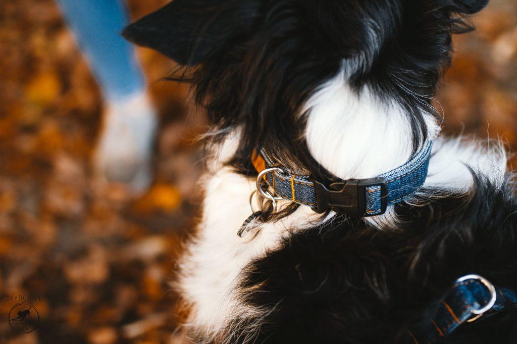 Jeansowa obroża dla psa