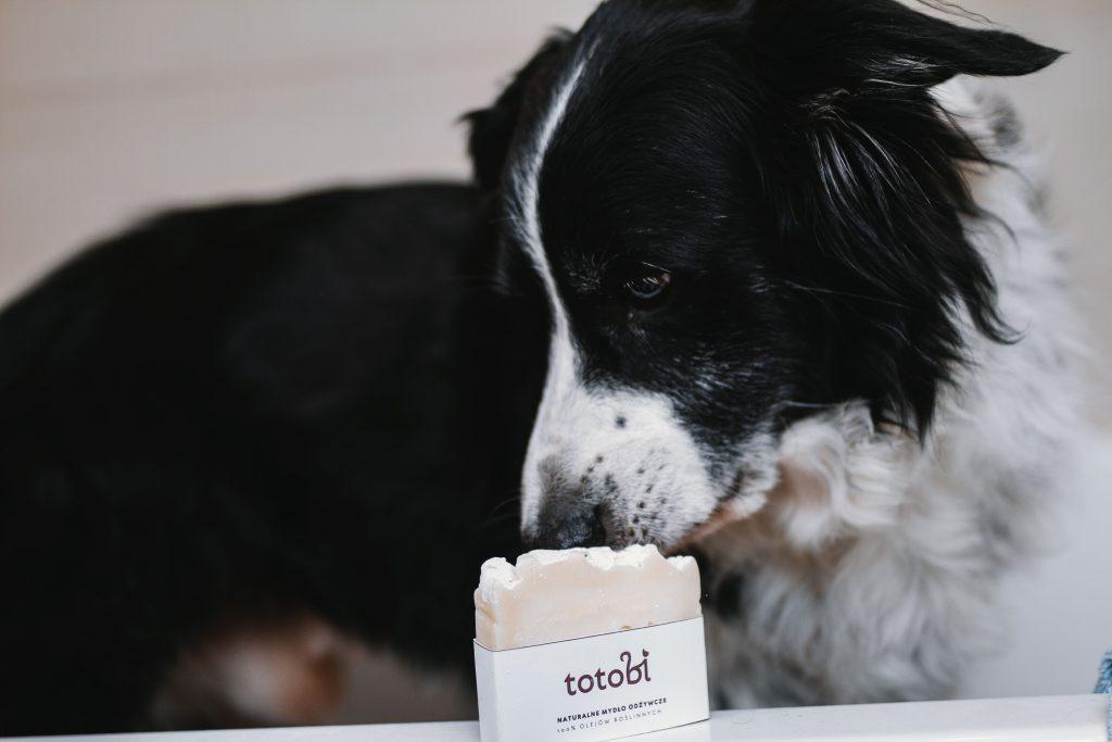 Szaman chce zjeść mydełko totobi